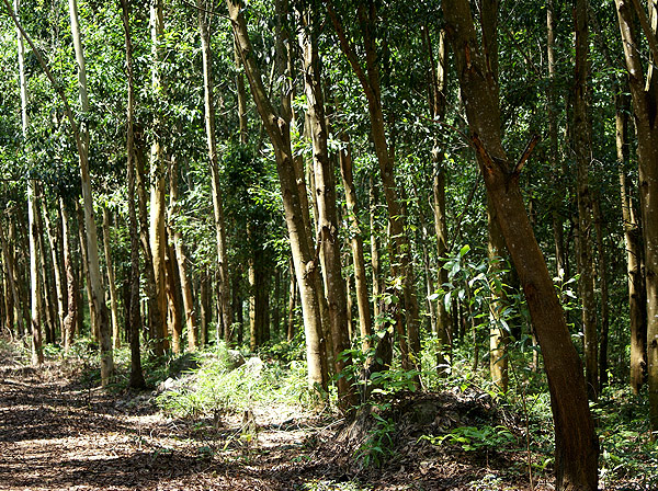 forest009.jpg