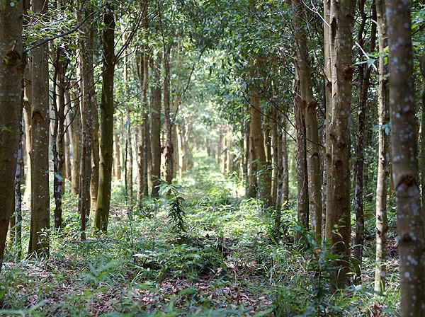 forest010.jpg