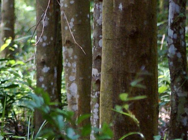 forest011.jpg