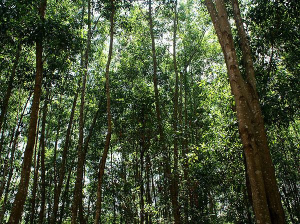 forest012.jpg