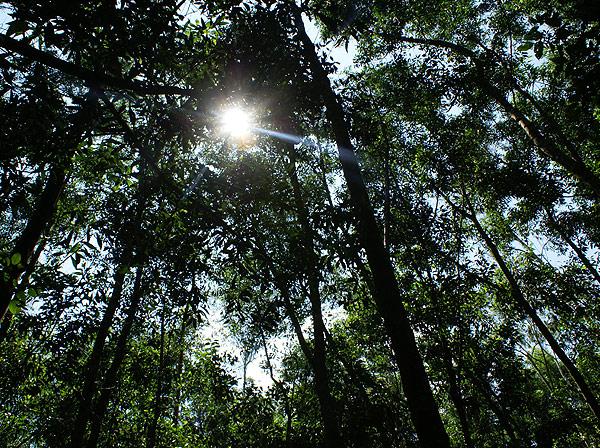 forest013.jpg
