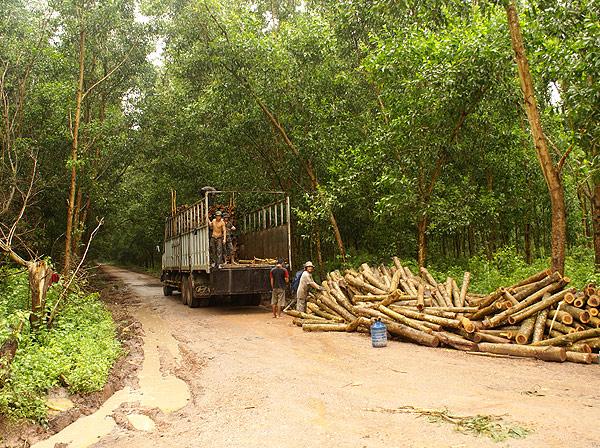 forest014.jpg