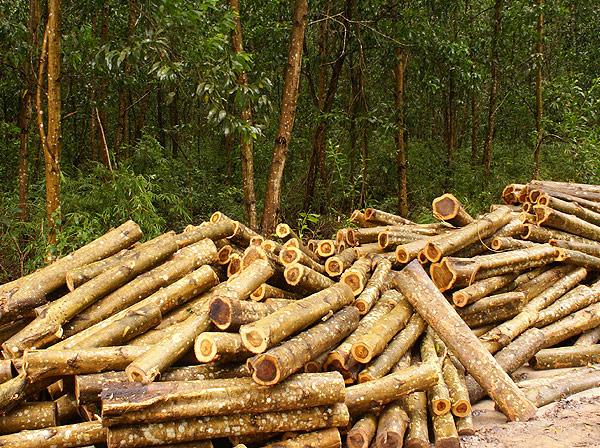 forest015.jpg